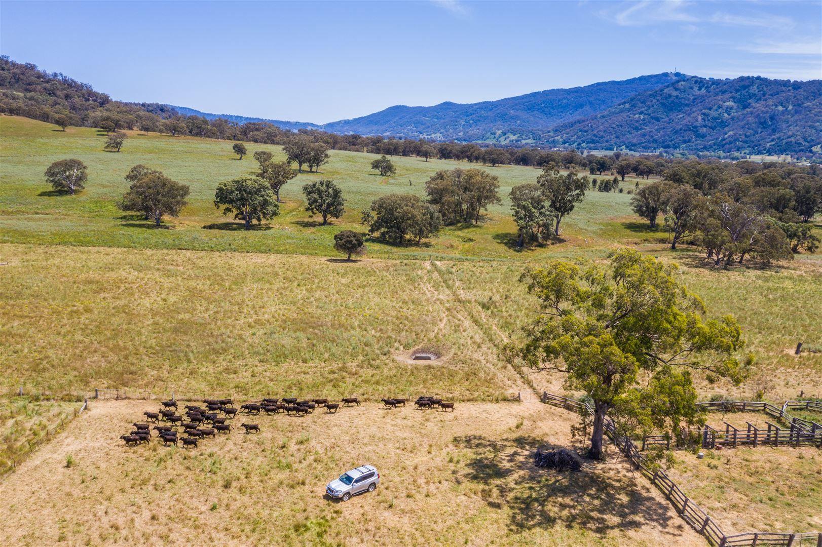 210 Stock Route Rd via Murrurundi, Blandford NSW 2338, Image 0