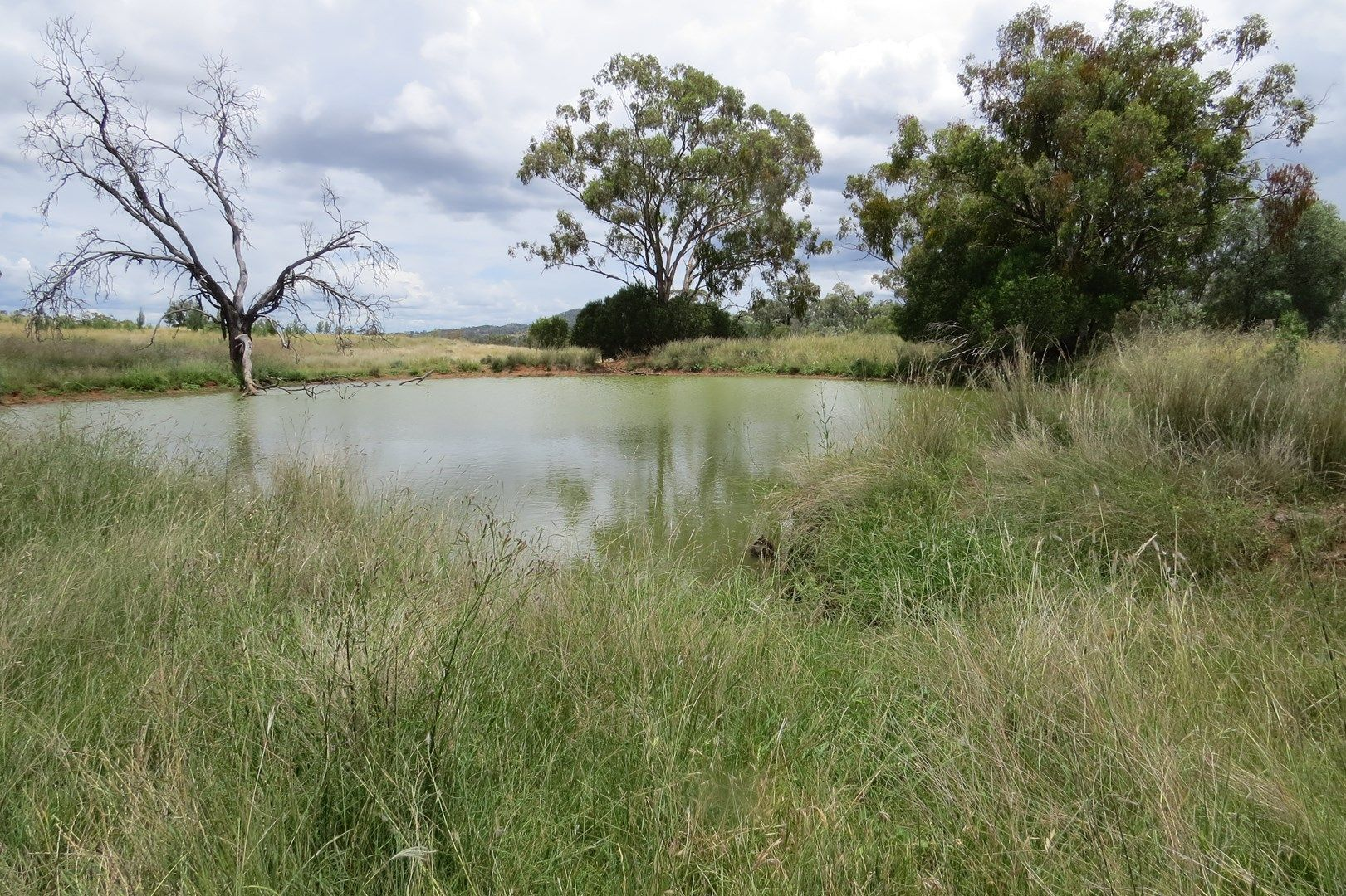 Water + Grass = Cattle, Warialda NSW 2402, Image 0