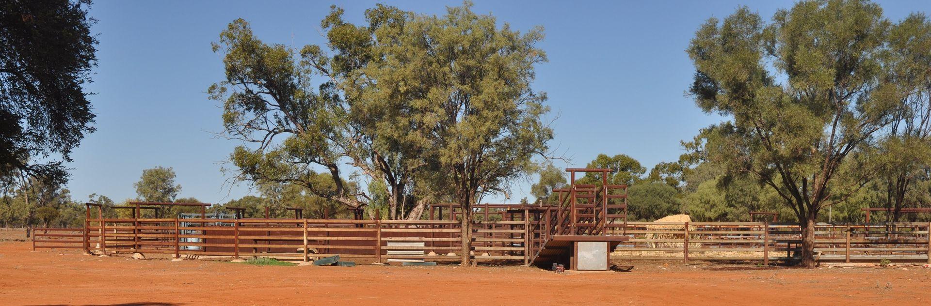 . BLUE RIBBON SHEEP COUNTRY -, Cunnamulla QLD 4490, Image 2