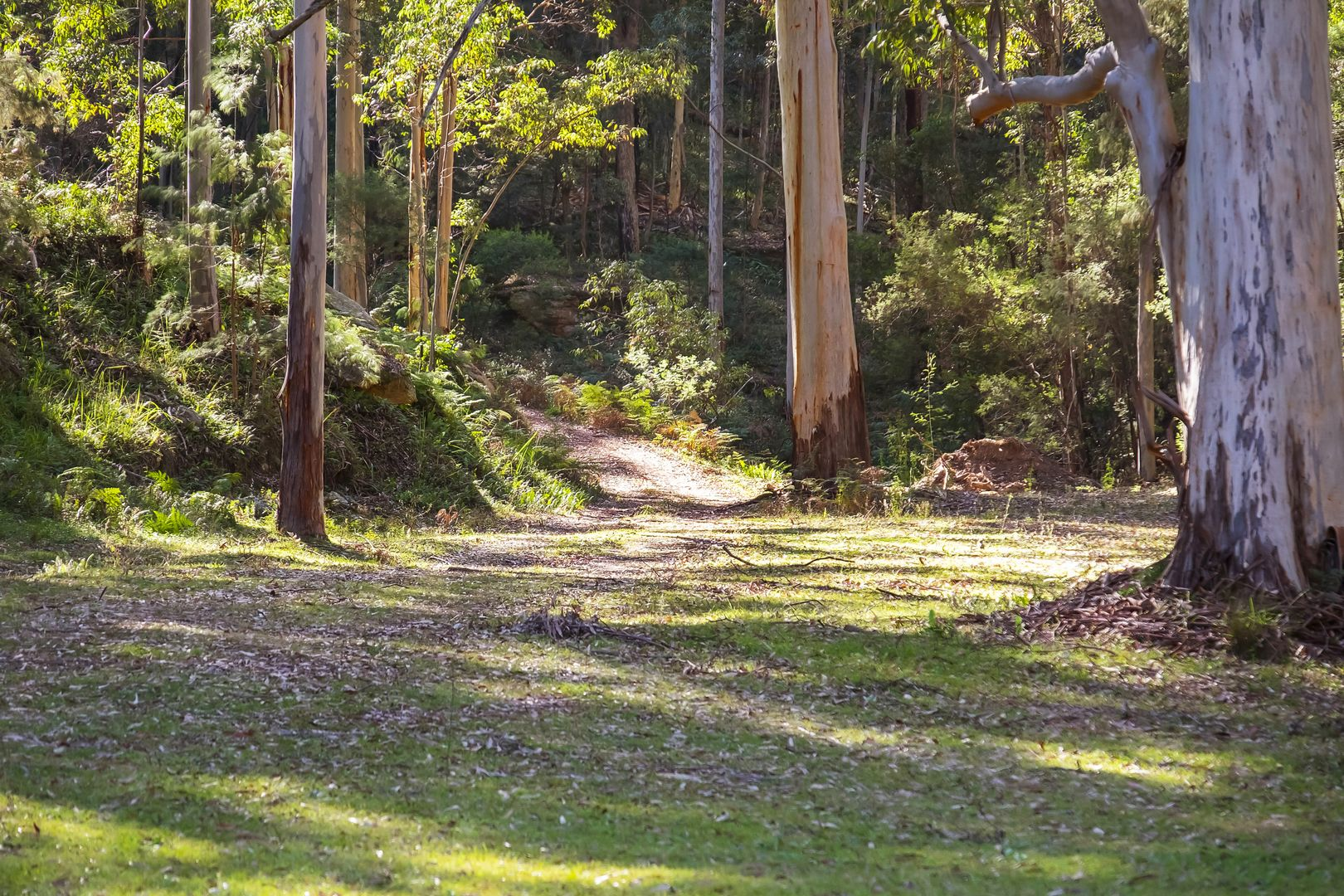 Lot 5 DP 730372 Putty Valley Road, Putty NSW 2330, Image 0