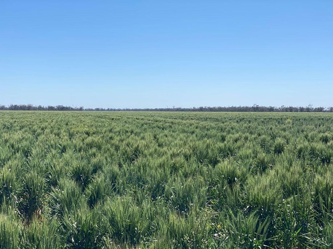 Coomonga, Goondiwindi QLD 4390, Image 1