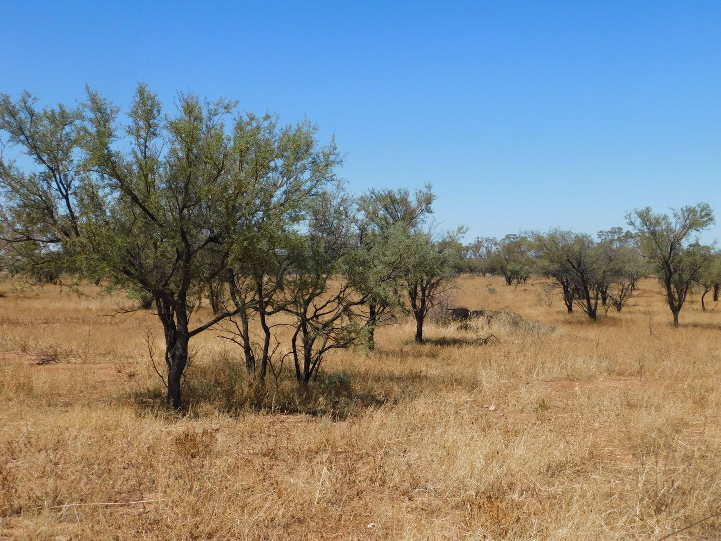 Lot 155 Gulf View Road, Napperby SA 5540, Image 2