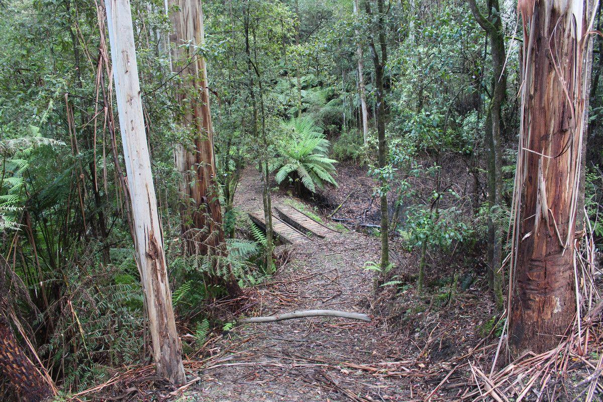 574 Apollo Bay-Forrest Road, Barramunga VIC 3249, Image 0