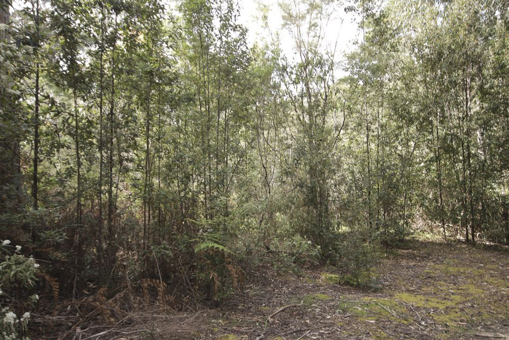 Wilmot Road, Kindred TAS 7310, Image 2
