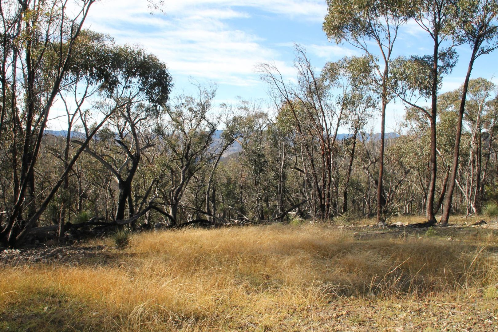 Lot 24 Bluff Creek Road, Tenterfield NSW 2372, Image 1