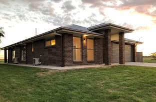 Picture of 59 Boland Drive, Moree NSW 2400