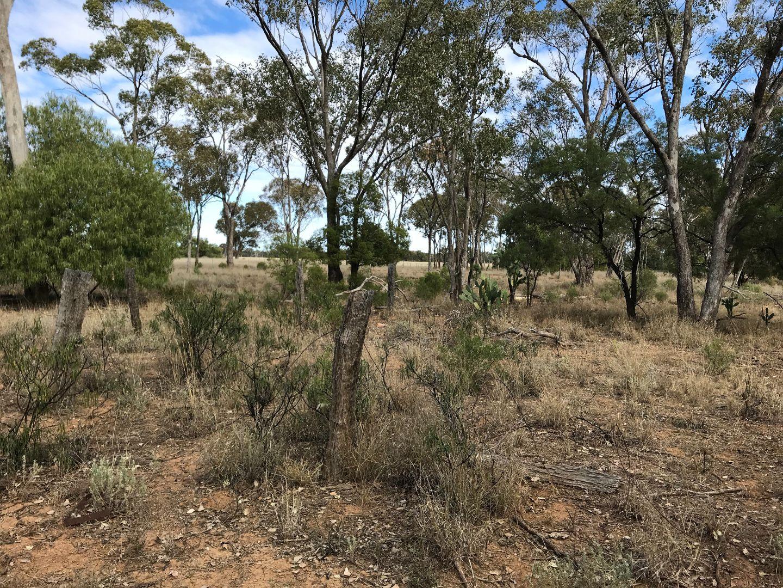 24 - 27 Unnamed Off Railway Road, Mungallala QLD 4467, Image 2