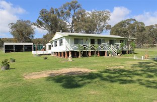 Picture of 2125 Wellington Vale Rd, Emmaville NSW 2371