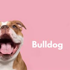 _Bulldog Realtor