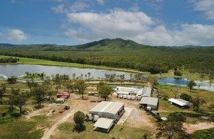 Picture of 4684 Mulligan Highway, Lakeland QLD 4871