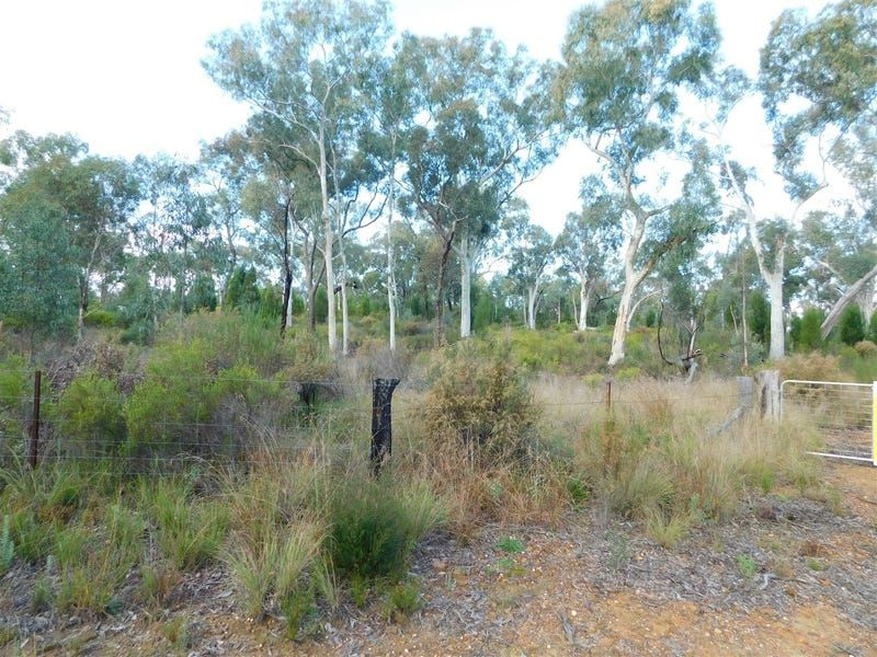 4166 Baradine Road, Coonabarabran NSW 2357, Image 2