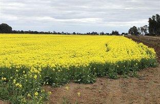 Picture of . The Oaks, Deniliquin NSW 2710