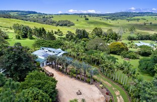 Picture of 39  Platypus Close, Yungaburra QLD 4884