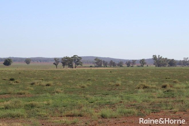 Picture of 656 Crowley Road, TRUNDLE NSW 2875