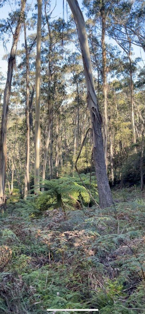 14 Nellies Glen Road, Katoomba NSW 2780, Image 2