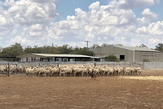 Picture of 686 Cambo Rd Cambo, MUNGINDI NSW 2406