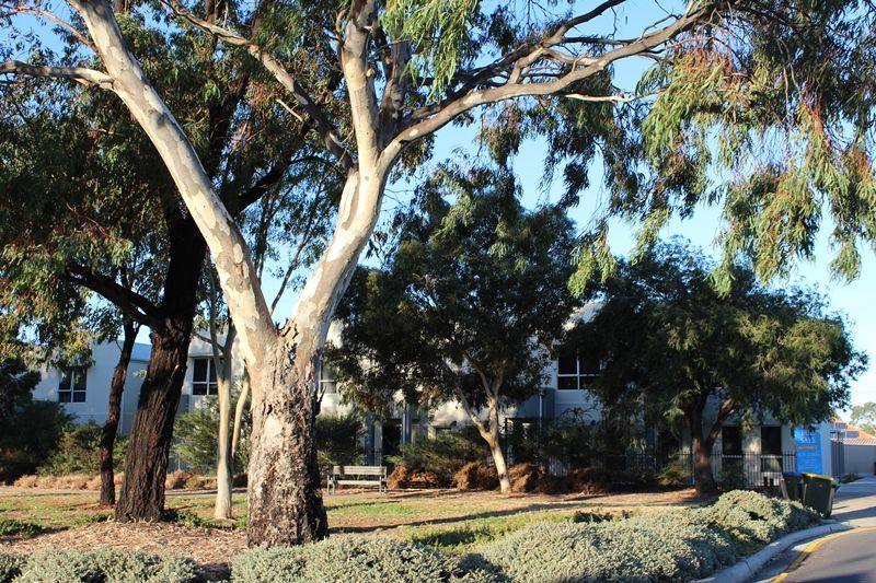 3/28 Clare Street, Athol Park SA 5012, Image 2