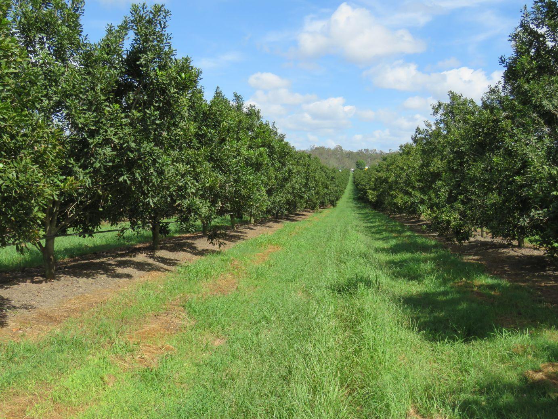 494 Walkers Road, South Bingera QLD 4670, Image 2