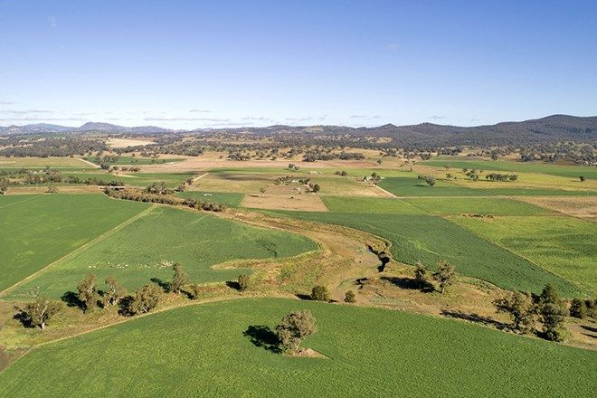 """Picture of """"Spring Vale"""" 683 Wallabadah Rd, QUIRINDI NSW 2343"""