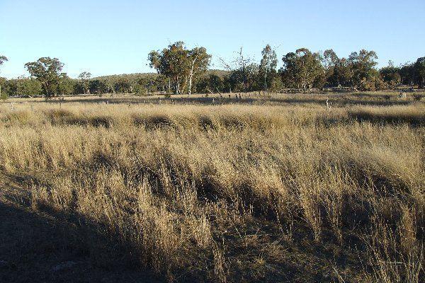 "1816 Acres ""Limestone"", Texas QLD 4385, Image 1"