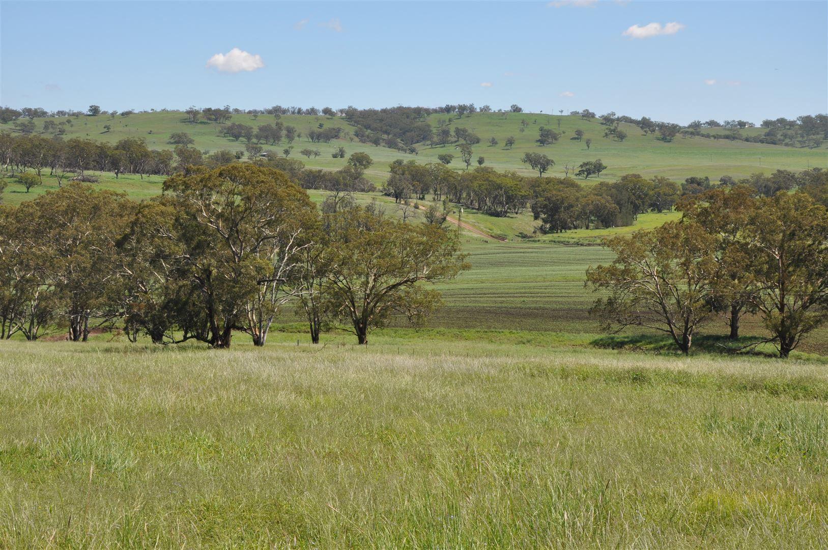 705 Coolah Rd, 'Culbara', Cassilis NSW 2329, Image 0