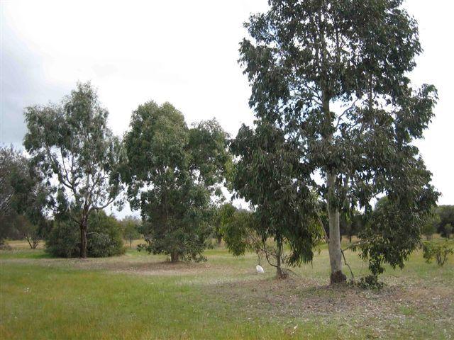 5 Treasure Road, Woodanilling WA 6316, Image 0