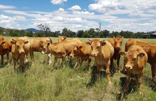 Picture of Pretoria, 328 Clowes Road, Currabubula, Tamworth NSW 2340