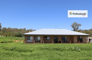 Picture of 142 Roscrae Lane, Inverell NSW 2360