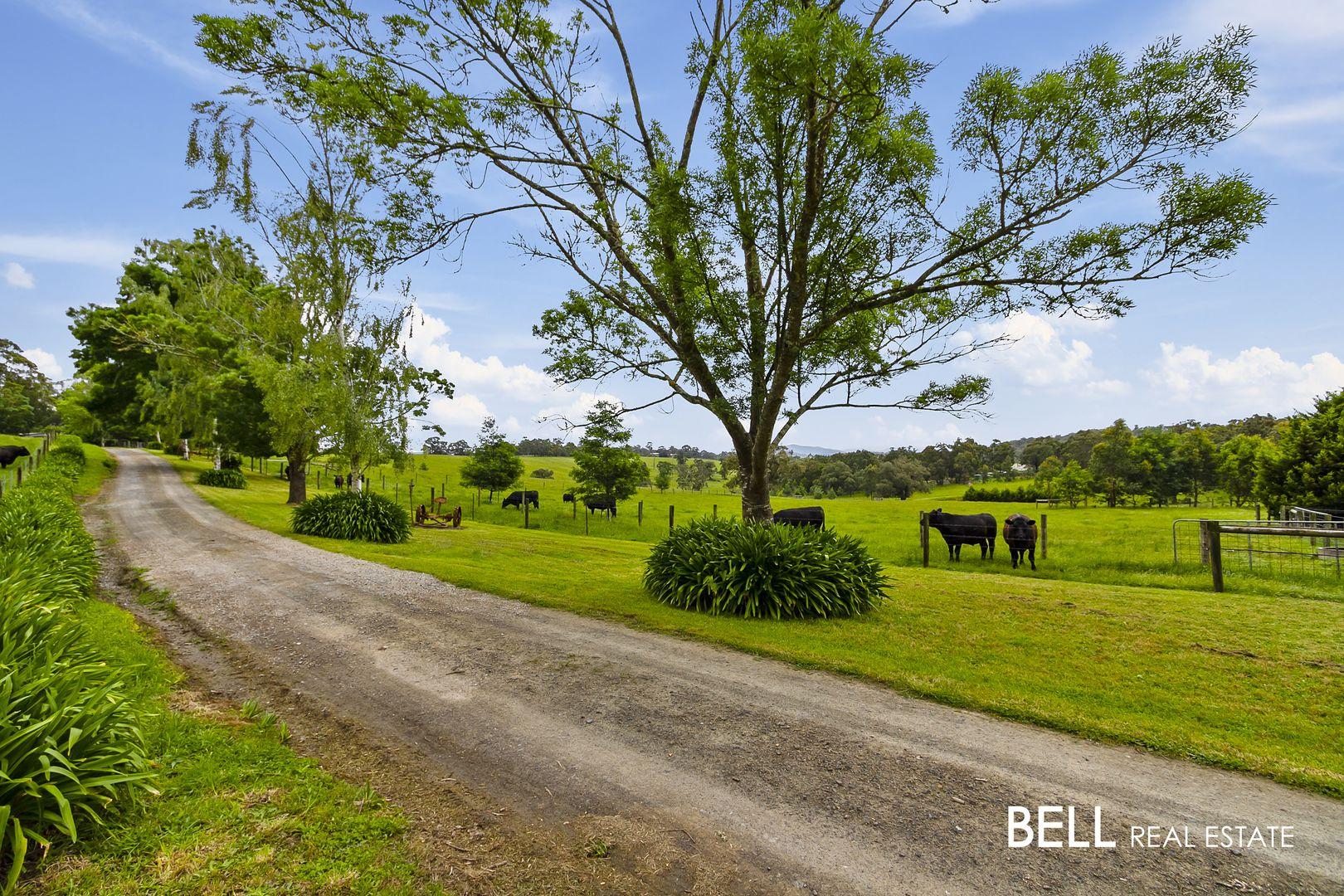 310 Beenak Road, Yellingbo VIC 3139, Image 2