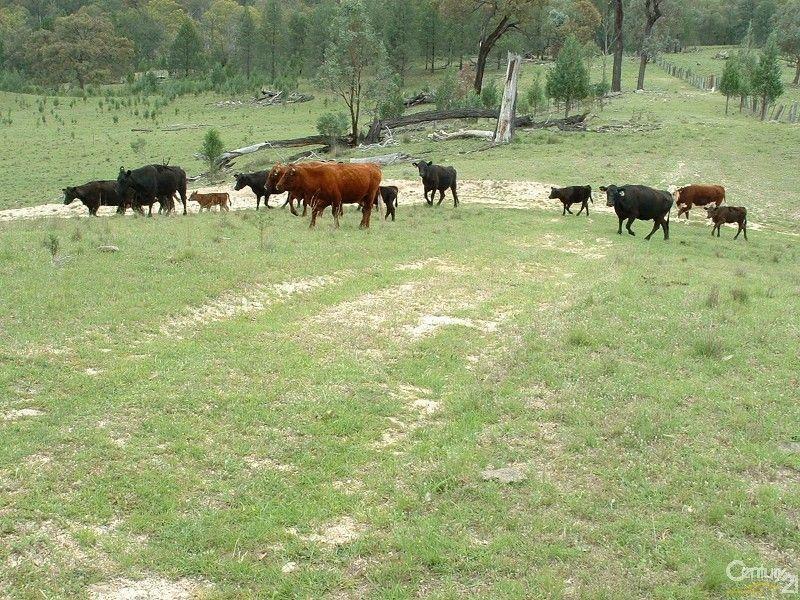 Kurrajong 886 Wearnes Road, Bundarra NSW 2359, Image 0