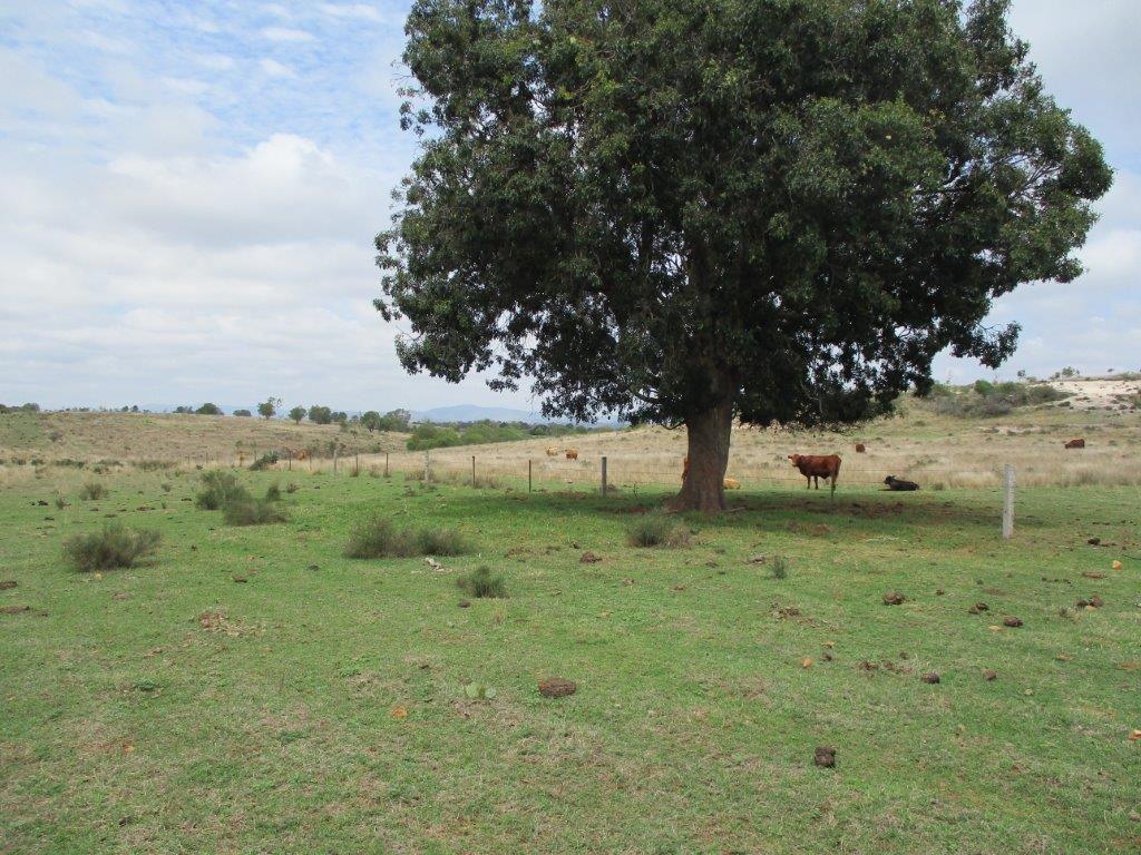 640 ACRES CATTLE PROPERTY, Kumbia QLD 4610, Image 1