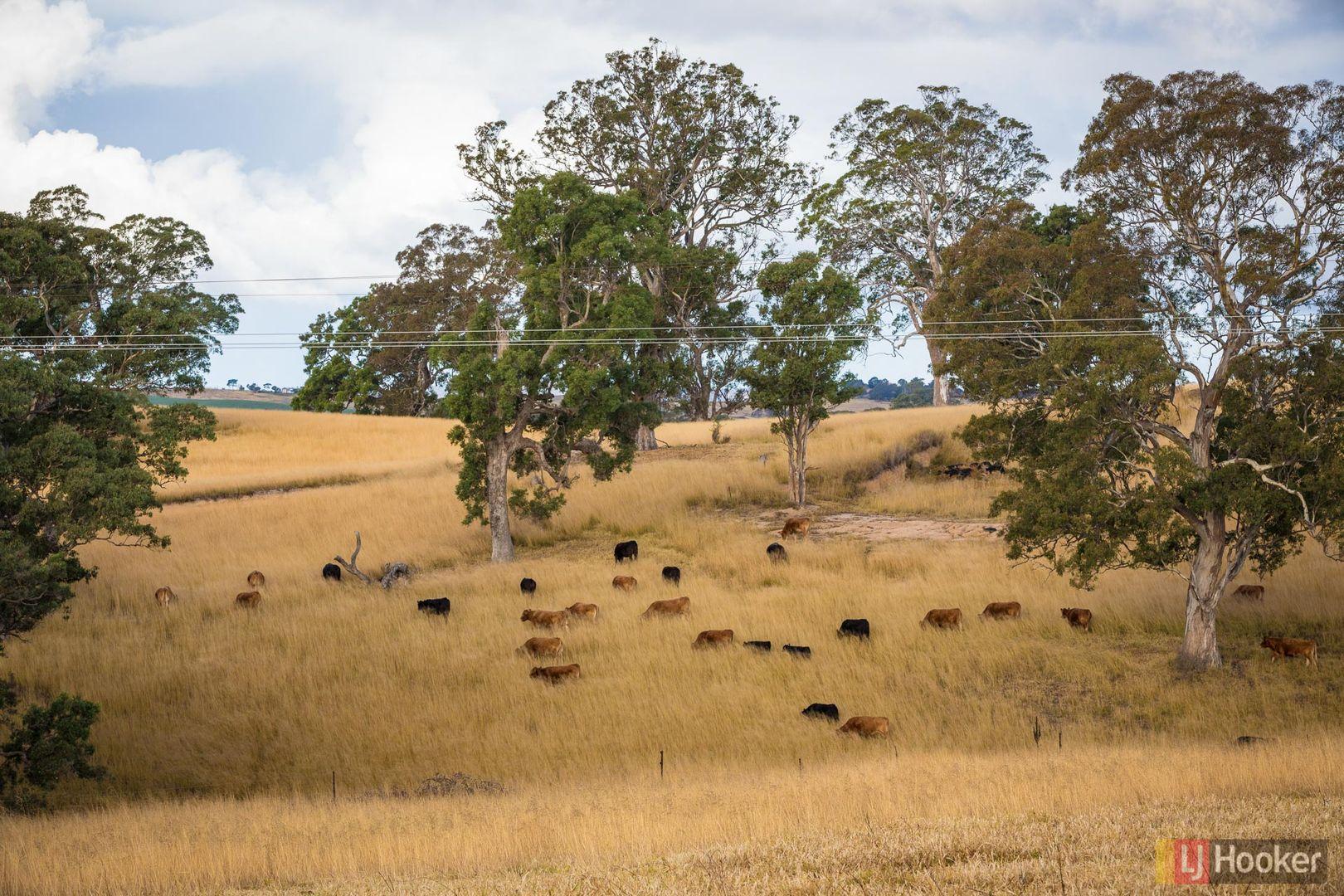 124A Mogilla Road, Candelo NSW 2550, Image 1