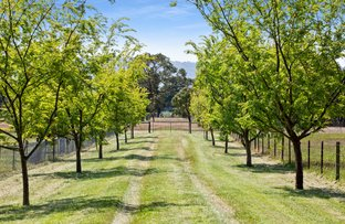Picture of F E N D I   8 Boundary Road, Dromana VIC 3936