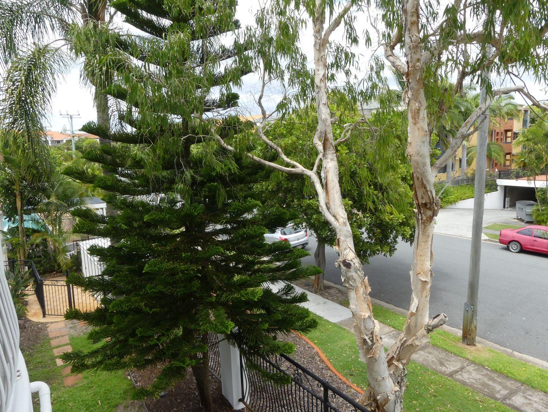 49/7-17 Purli St, Chevron Island QLD 4217, Image 0