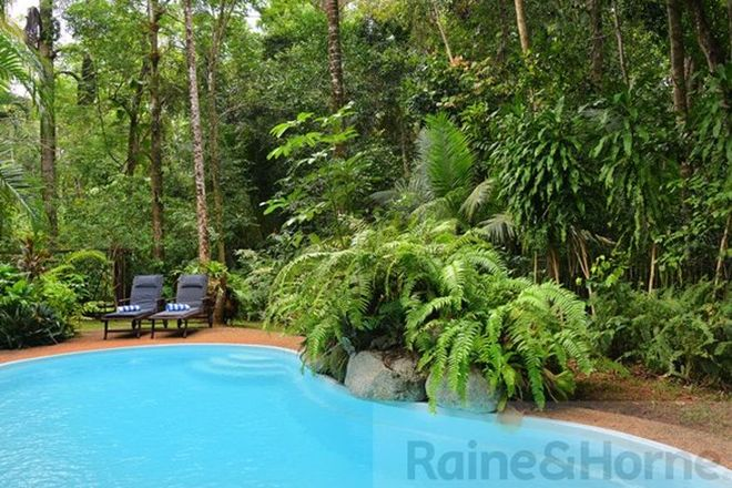 Picture of 445 Buchanan Creek Road (Wait a While Retreat ), DAINTREE QLD 4873