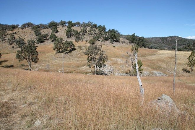 Picture of Lot 7 Gunyah Road, TENTERFIELD NSW 2372