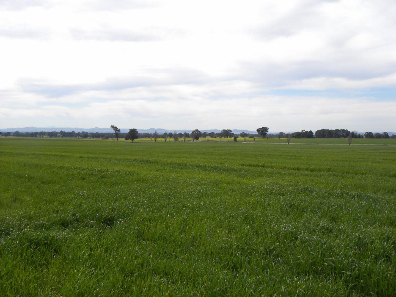 Lot 3 TALLAROOK ROAD, Cowra NSW 2794, Image 2