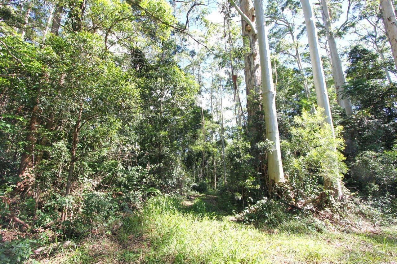 Bellthorpe QLD 4514, Image 0