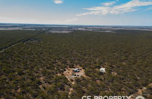 Picture of 113 Mallee Road, Walker Flat SA 5238