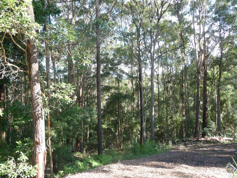 Towen Mountain QLD 4560, Image 1