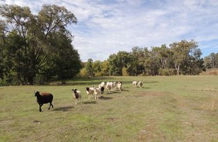 """Buck Downs' Dows Lane, Coonabarabran NSW 2357"