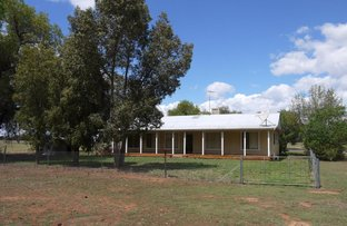 Picture of 3553 TOMINGLEY ROAD, Narromine NSW 2821