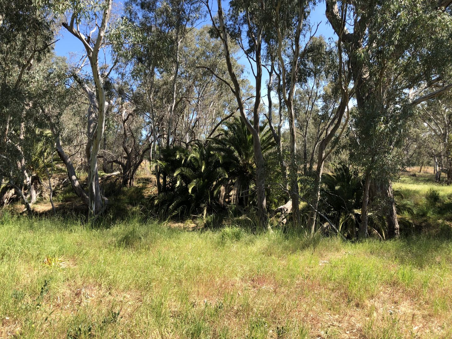 Lot 7 Adams Street, Marong VIC 3515, Image 1