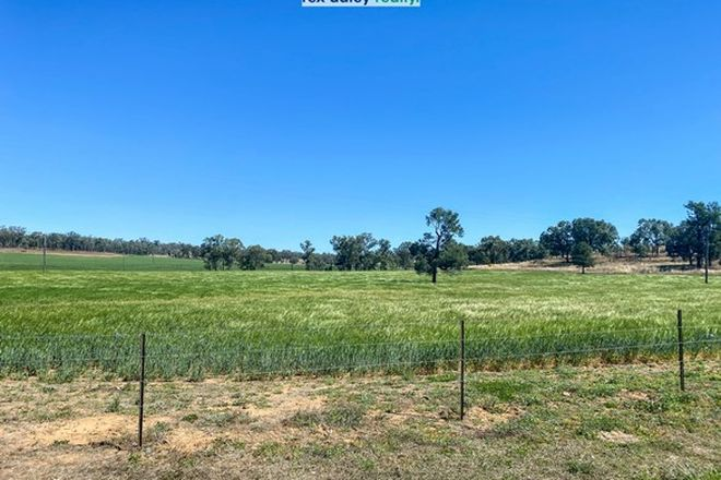 Picture of 3369 Warialda Road, COOLATAI NSW 2402