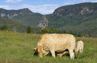 Picture of Lot 2, 2325 Nerang Murwillumbah Road, Numinbah Valley QLD 4211