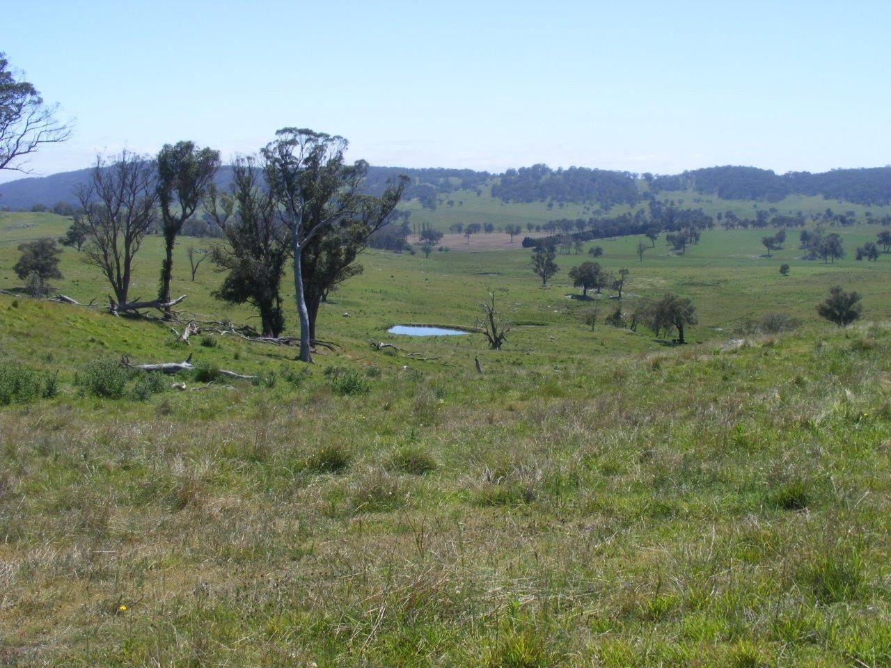 Fletchers'/. Mt Mitchell Road, Glencoe NSW 2365, Image 1