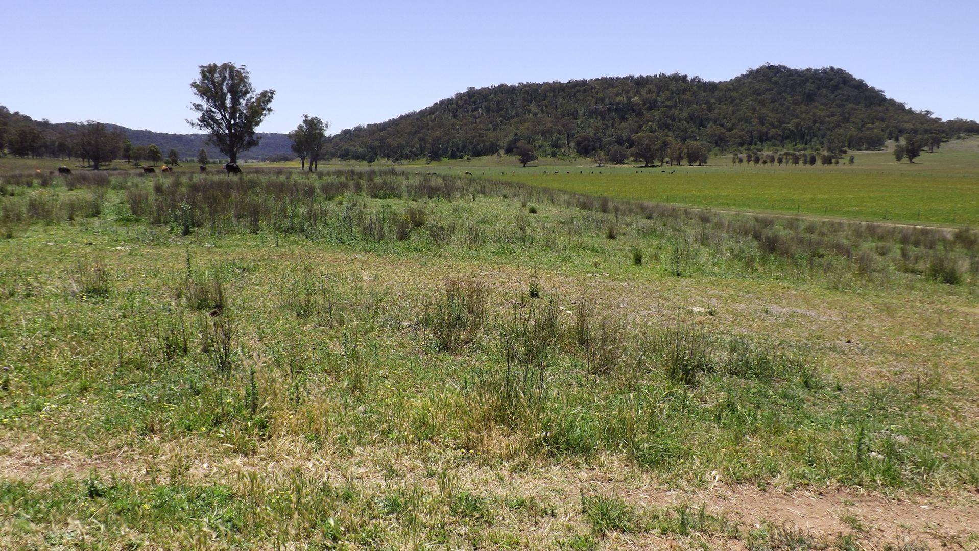 """Yarrawonga"", Denman NSW 2328, Image 2"