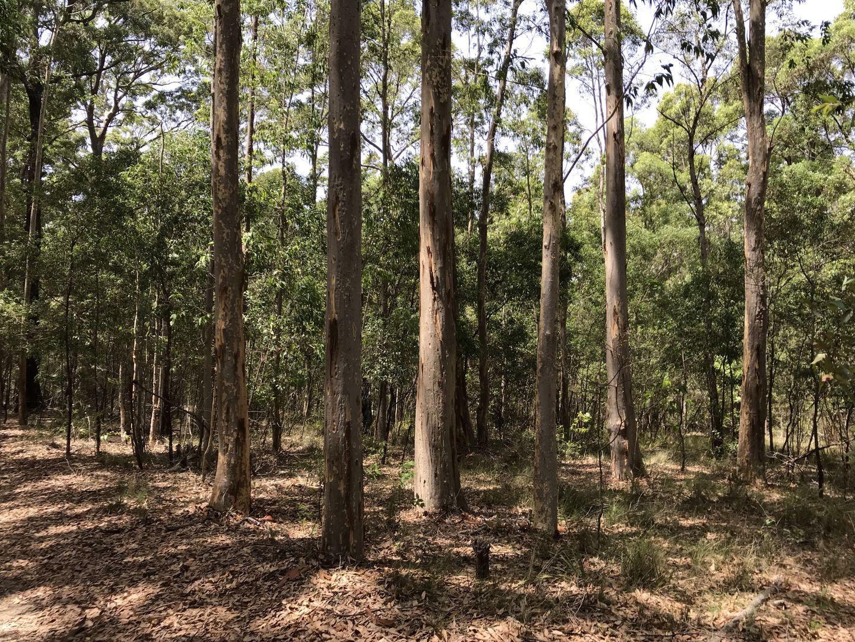 36,152, 154 DP755965 off Jervis Bay Road, Falls Creek NSW 2540, Image 1