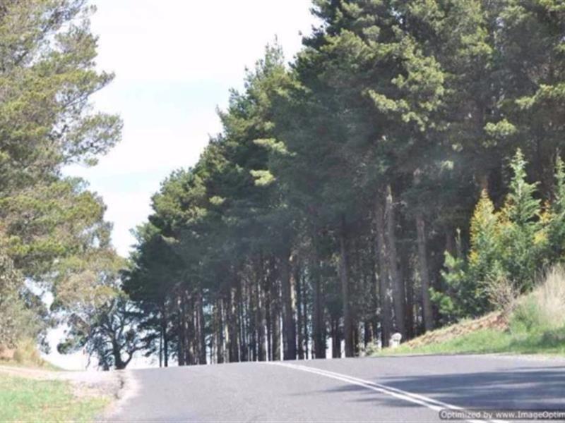 Sunny Corner NSW 2795, Image 1