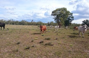 Picture of Limevale-Greenup Rd, Coolmunda QLD 4387